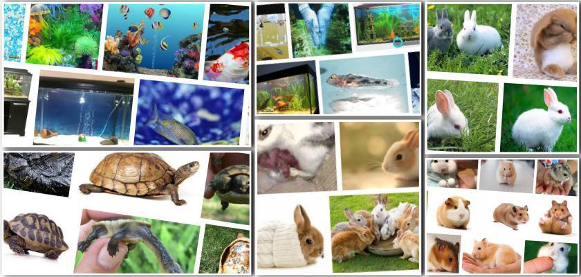 Kedi ve Köpekleri Pire, Kene Gibi Parazitlerden Nasıl Koruruz?